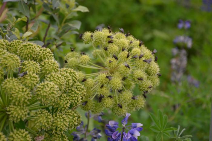 Bloemen Laugavegur